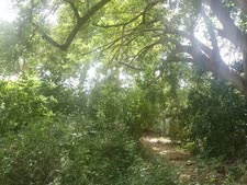 גן המנשה [צילום: אלי אלון]