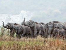 באפריקה נולד פיל עם עור של ביבי [AP]