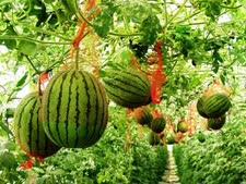 """חקלאות בערבה [צילום: מו""""פ ערבה]"""