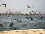 שחפים חגים מול עיר הנמל ג'דה [צילום: עמר נביל/AP]