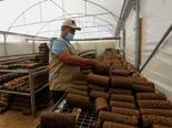 מפעל בחאן יונס להפקת דלק מגפת זיתים [צילום: עבד אל-רחים חטיב/פלאש 90]