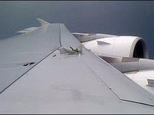 """הכנף הפגועה במטוס איירבוס כפי שצולמה ע""""י אחד הנוסעים, אתמול [צילום: AP]"""