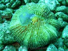 2,600 אלמוגים נפגעו [צילום אילוסטרציה: עמרי ברונשטיין]