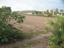 האיזור בו מתוכנן לקום פרויקט השוק הסיטונאי [צילום: אלי אלון]