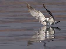 ים הכנרת. שפעת מים שמחה [צילום: פלאש 90]