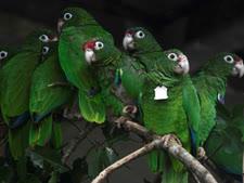 ירוק עד [צילום: קרלוס גוויסטי/AP]