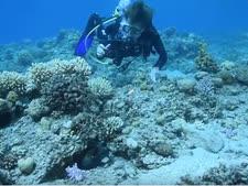 """ד""""ר סילביה ארל [צילום: חגי נתיב  מרכז מוריס קאהן לחקר הים, ביה""""ס למדעי הים ע""""ש צ'רני, אוניברסיטת חיפה]"""