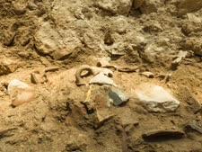 שרידי כלים שהתנפצו ברעידת האדמה [צילום: אליהו ינאי - עיר דוד]