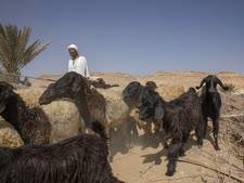 מצרים. איזור מרעה שהפך למדבר [צילום: נריאם אל-מופתי, AP]