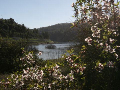 העץ כמשאבת מים [צילום: אנה קפלן/פלאש 90]