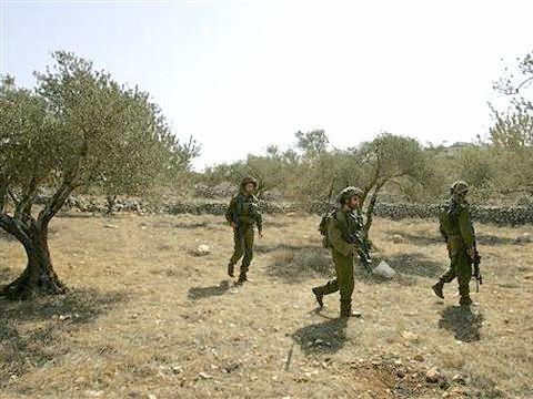 חיילים מאבטחים מסיק זיתים [צילום: AP]