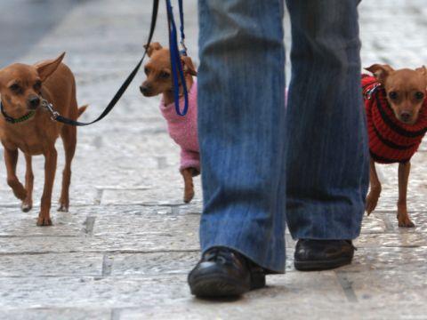 גם עם הכלב [צילום: פלאש 90]