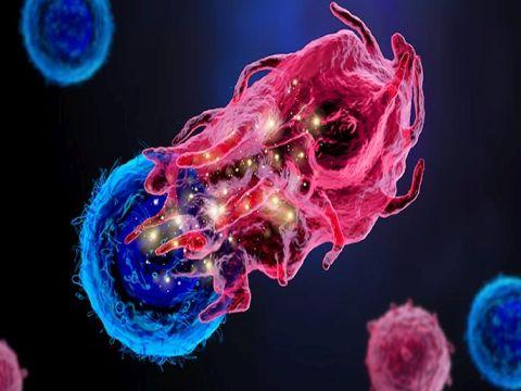 מבט לנעשה בתוך התאים [צילום: מכון ויצמן למדע]